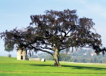 Witton Castle Country Park